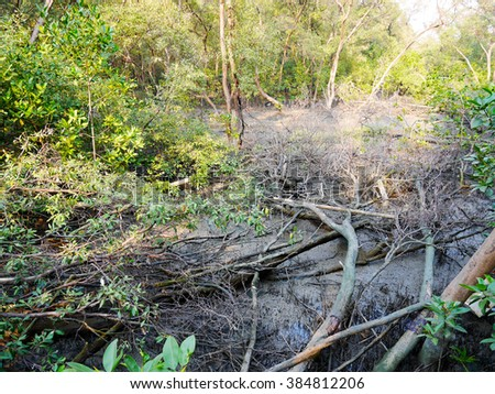 The deforestation in mangrove forest in thailand - stock photo