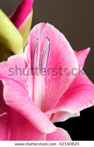The details (close up shot) of gladiolus flower - stock photo