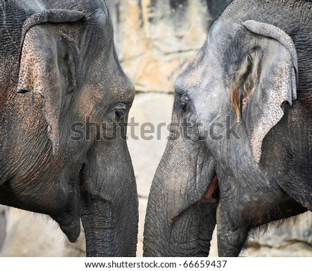 The details - the head of the Indian elephant - stock photo