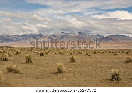 The Devil's Cornfield below the mountains and dramatic sky in Death Valley National Park, California. - stock photo