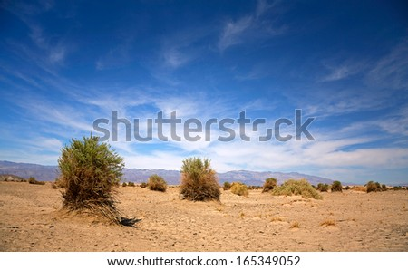 The Devil's Cornfield, Death Valley, California, USA - stock photo