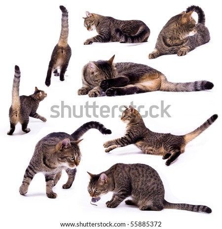 The different cat on the white isolated background - stock photo