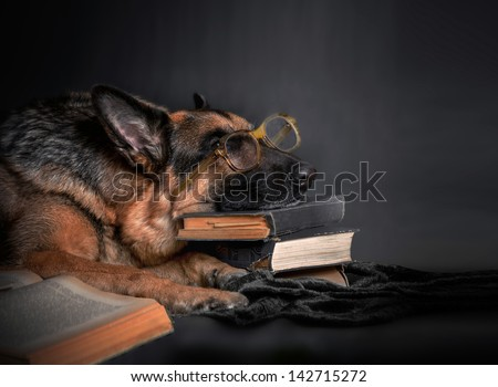 The dog, a German Shepherd with glasses rested her head on a stack of books, resting, tired of studying. Education, student, student - stock photo