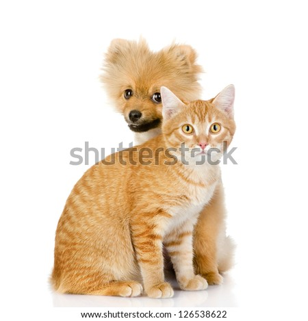 the dog and cat together. isolated on white background - stock photo