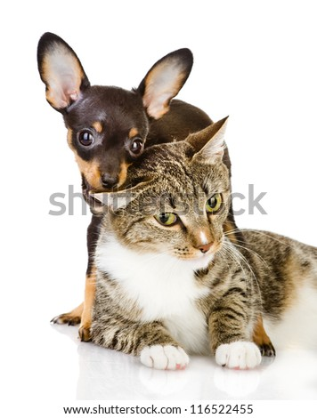 the dog bites a cat. Isolated on a white background