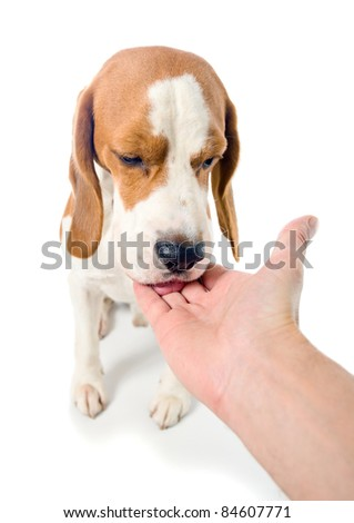The dog eats from a hand, white background. - stock photo