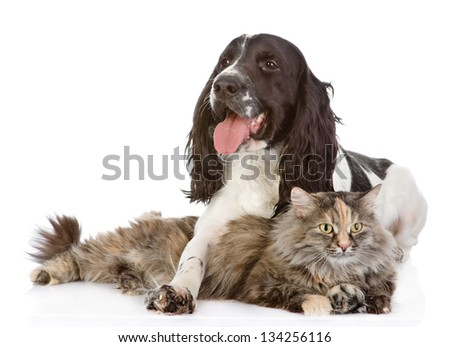 the dog embraces a cat. looking at camera. isolated on white background - stock photo