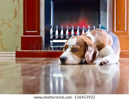 The dog has a rest on wooden to a floor near to a fireplace - stock photo
