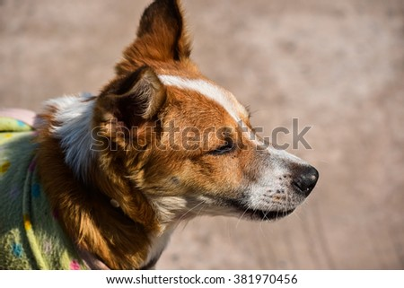 The dog in outdoor - stock photo