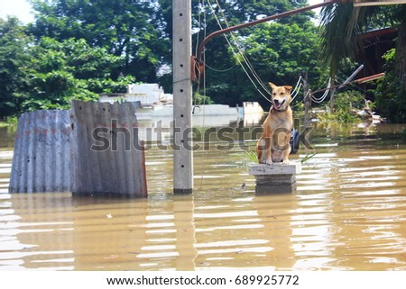 The dog is lost to the owner while flooding.