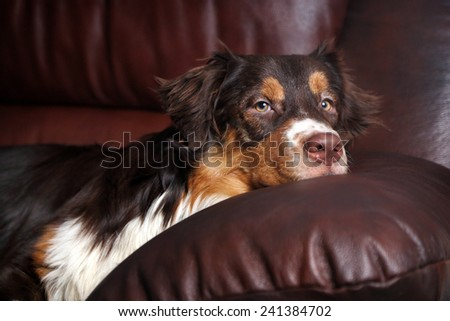 The dog on the couch