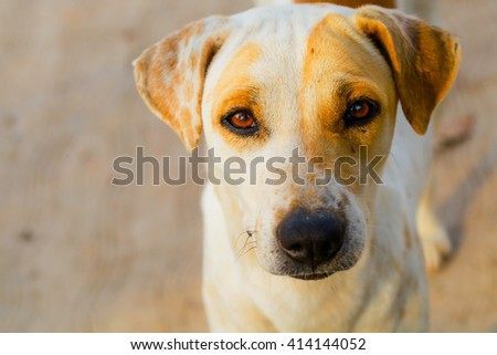 The dog  play in outdoor - stock photo