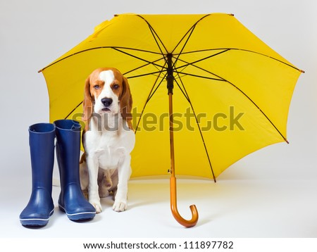 The dog should walk in any weather. - stock photo