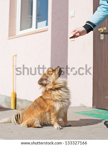 the dog waits for sterns - stock photo
