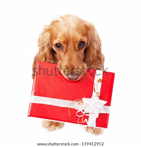 The dog with the beautiful red present - stock photo