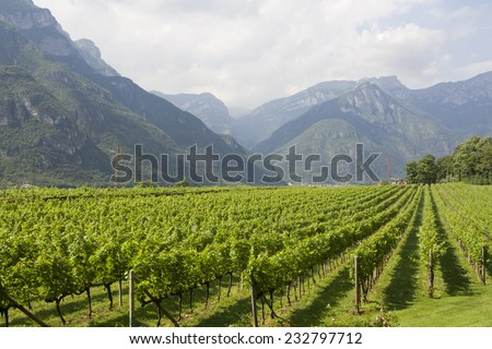 The Dolomites can be seen in Trento, north of Italy. Wine production is one of the main industries in this area. - stock photo