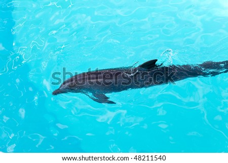 The dolphin - stock photo