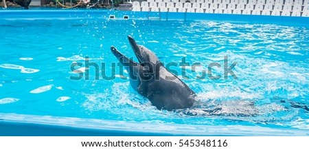 The dolphin swims in the Dolphinarium. The dolphin sings