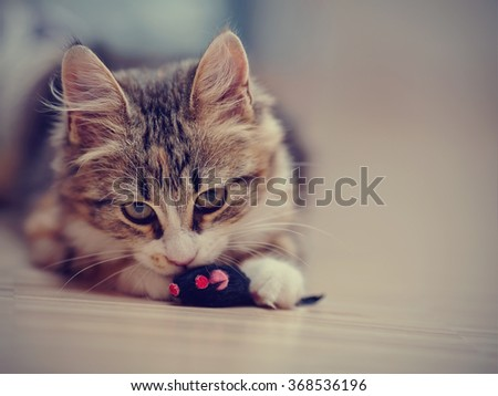 The domestic multi-colored kitten plays with a toy on a floor. - stock photo