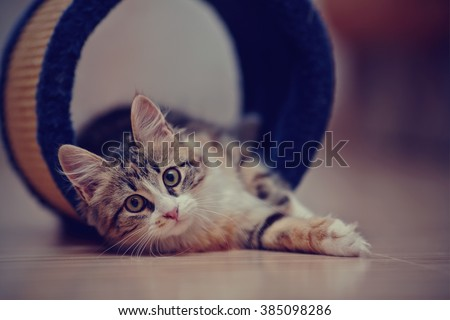 The domestic multi-colored kitten sits on a floor. - stock photo