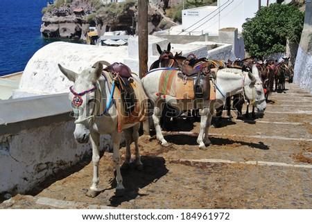 The donkeys in Thira (Santorini Island - Greece) - stock photo