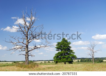 The dried up tree - stock photo