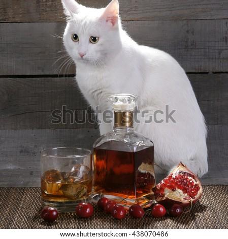 The drinking cat - stock photo