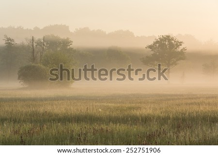 The early morning sun shines through banks of fog on an early spring morning - stock photo
