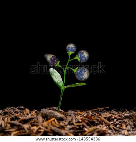 The earth plants - stock photo