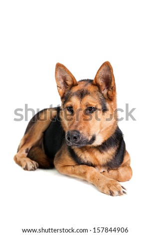 The East-european dog on the white background - stock photo