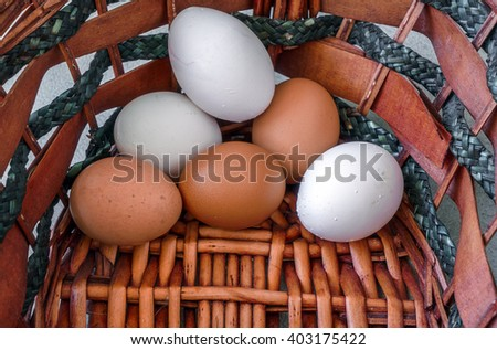 The Egg in Basket
