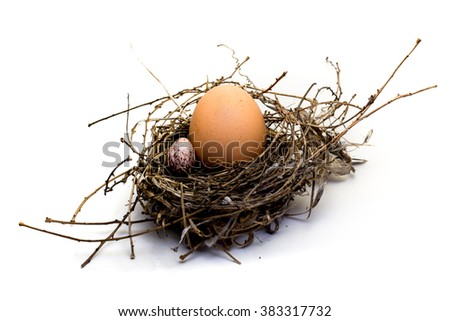 The eggs in the nest