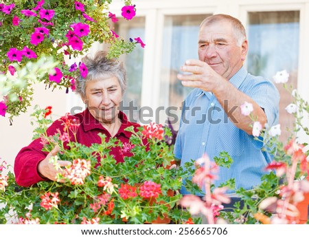 The elderly couple admire their colorful flowers - stock photo