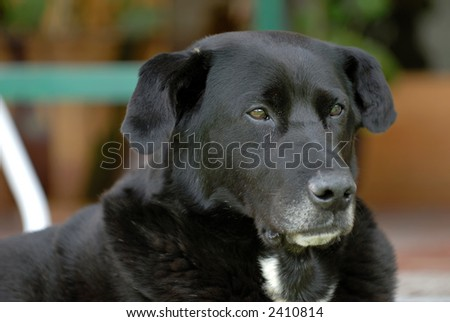 the elderly dog - stock photo