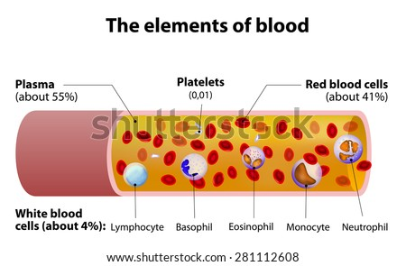 Elements Blood Blood Vessel Cut Section Stock Illustration 281112608