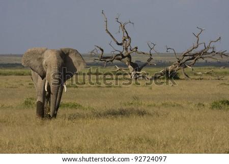 The elephant - stock photo