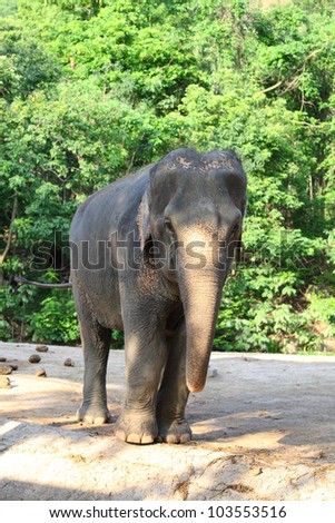 The elephant is looking at us in Thailand  zoo. - stock photo