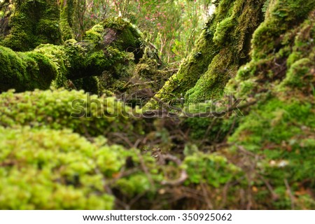 The enchanted walk in world heritage cradle mountian area tasmania - stock photo