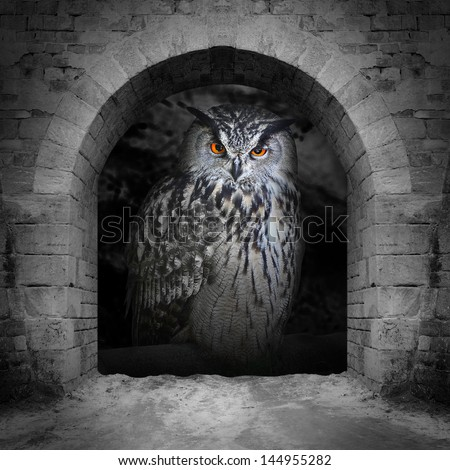 The evil eyes in the vault window. ( Eagle Owl, Bubo bubo). Halloween theme. - stock photo