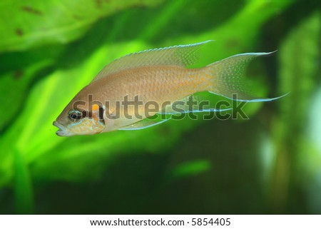the exotic fish in aquarium, natural lighting