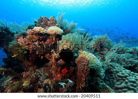 The extreme activety of an indo pacific coral reef