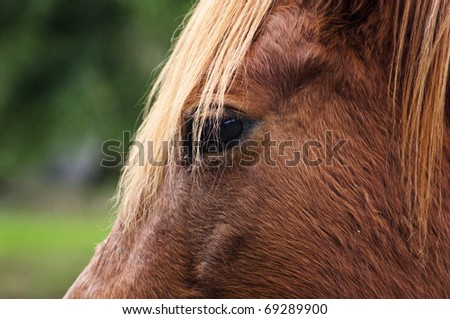 The eyes of a horse - stock photo