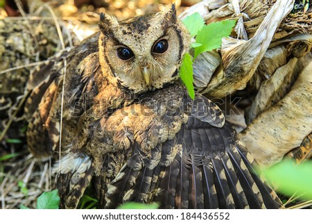 The eyes of owl. - stock photo
