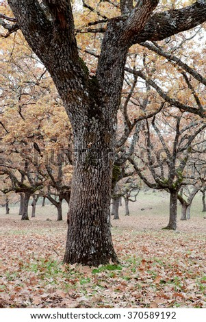 The fall in the pastures of Extremadura.  - stock photo