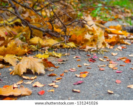 The fallen leaves under a bush on the side of the road closeup - stock photo