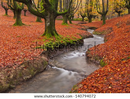 The falling leaves colors the autumn season in the forest. Otzarreta beech forest, Gorbea Natural Park, Bizkaia, Spain - stock photo
