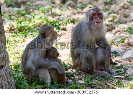 The family of monkeys. - stock photo