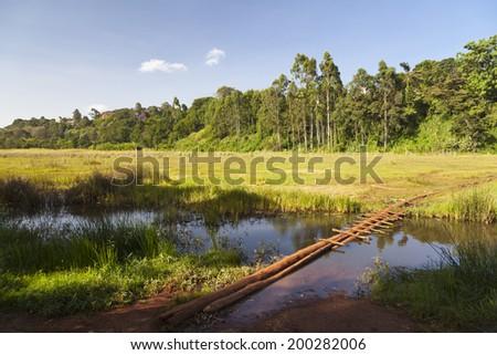 The famous Ondiri Swamp in Kikuyu near Nairobi in Kenya. The floating vegetation layer wobbles as you walk or jump on it. - stock photo