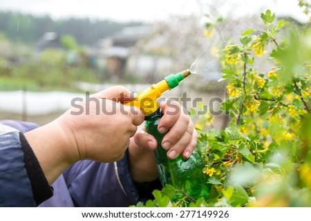 The farmer irrigate fruit trees - stock photo