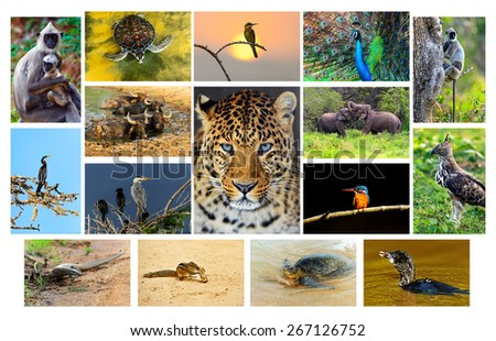 The fauna in the park Yala, Sri Lanka - stock photo